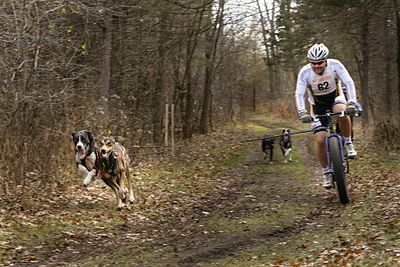 400px-Bikejoring_race