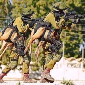 military-dog-walker
